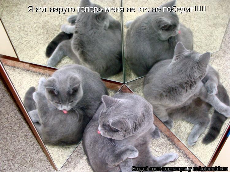 Котоматрица: Я кот наруто теперь меня не кто не победит!!!!!