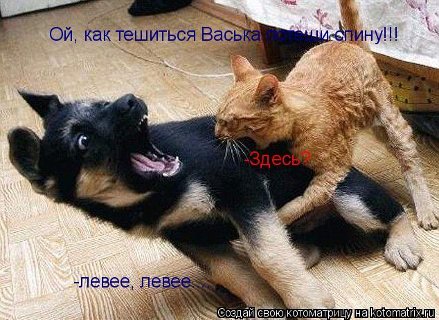 Котоматрица: Ой, как тешиться Васька потеши спину!!! -Здесь? -левее, левее....
