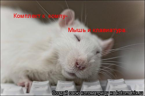 Котоматрица: Комплект к  компу- Мышь и клавиатура. Мышь и клавиатура.