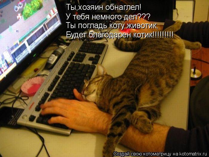 Котоматрица: Ты,хозяин обнаглел! У тебя немного дел??? Ты погладь коту животик, Будет благодарен котик!!!!!!!!!
