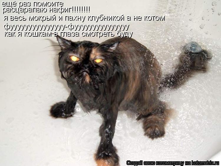 Котоматрица: ещё раз помоите я весь мокрый и пахну клубникой а не котом  фууууууууууууууу-фууууууууууууууу расцарапаю нафиг!!!!!!!! как я кошкам в глаза см
