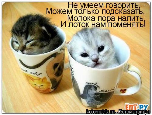 Котоматрица: Не умеем говорить, Можем только подсказать, Молока пора налить, И лоток нам поменять!