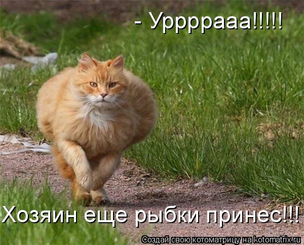 Котоматрица: - Уррррааа!!!!! Хозяин еще рыбки принес!!!