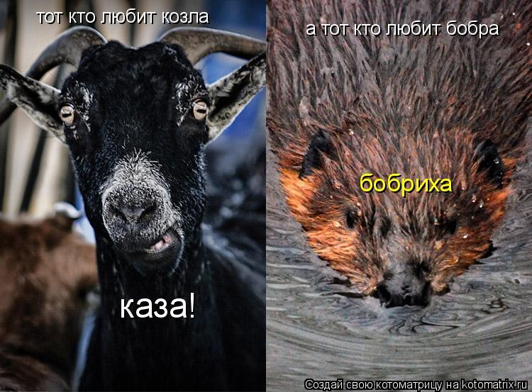 Котоматрица: тот кто любит козла каза! а тот кто любит бобра бобриха