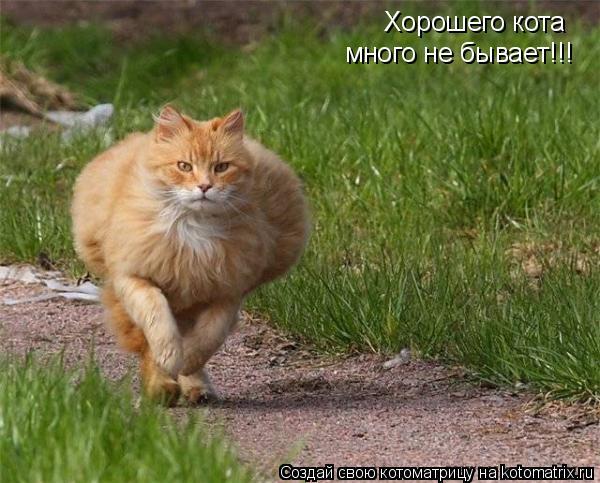 Котоматрица: Хорошего кота  много не бывает!!!