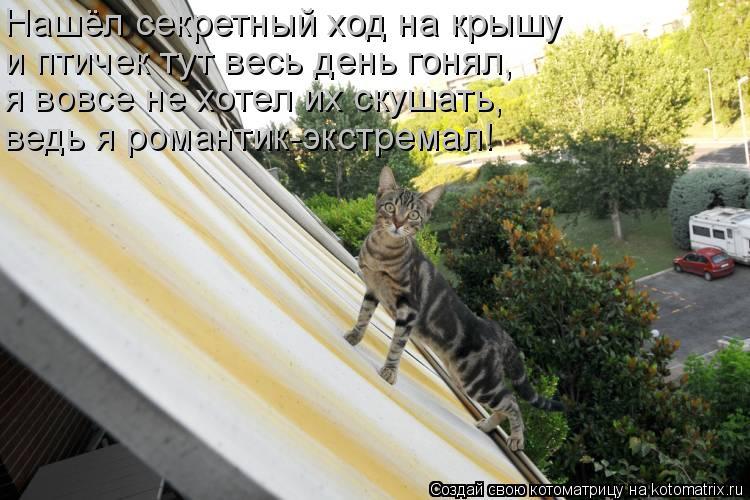 Котоматрица: Нашёл секретный ход на крышу и птичек тут весь день гонял, я вовсе не хотел их скушать, ведь я романтик-экстремал!