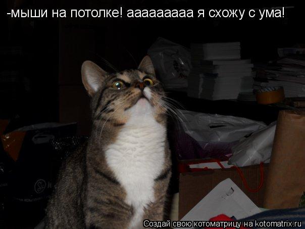 Котоматрица: -мыши на потолке! ааааааааа я схожу с ума!