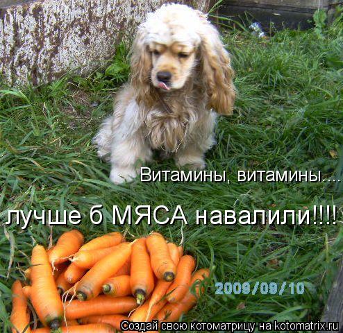 Котоматрица: Витамины, витамины....... лучше б МЯСА навалили!!!!