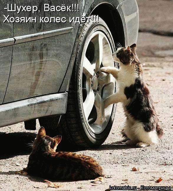 Котоматрица: -Шухер, Васёк!!! Хозяин колес идёт!!!