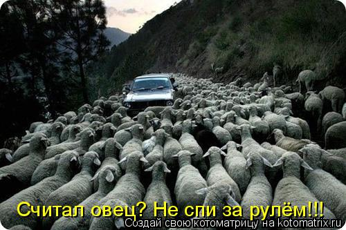 Котоматрица: Считал овец? Не спи за рулём!!!