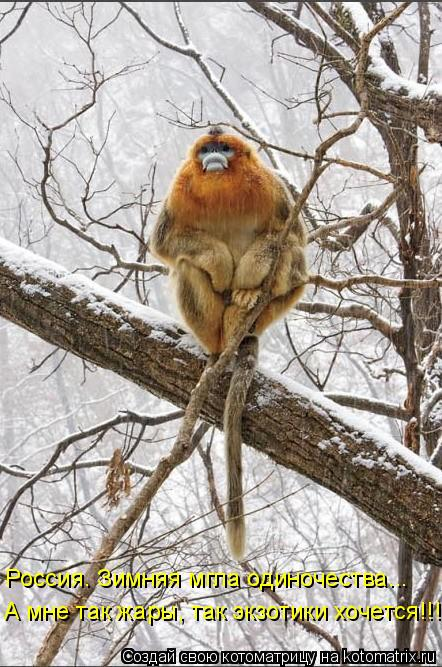 Котоматрица: Россия. Зимняя мгла одиночества... А мне так жары, так экзотики хочется!!!