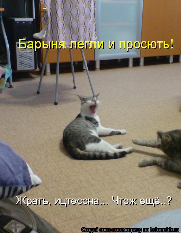 Котоматрица: Барыня легли и просють! Жрать, ицтессна... Чтож ещё..?