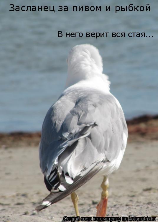 Котоматрица: Засланец за пивом и рыбкой В него верит вся стая...