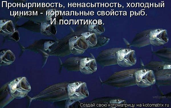 Котоматрица: Пронырливость, ненасытность, холодный цинизм - нормальные свойста рыб.  И политиков.