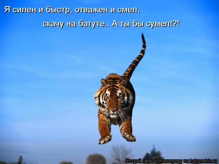 Котоматрица: Я силен и быстр, отважен и смел, скачу на батуте.. А ты бы сумел!?!