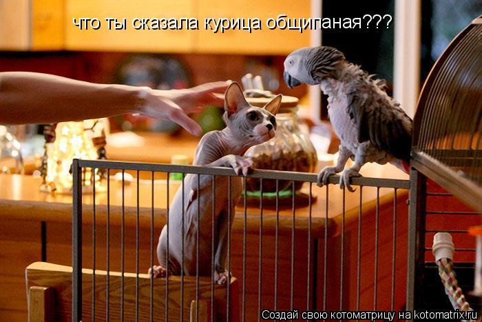 Котоматрица: что ты сказала курица общипаная???