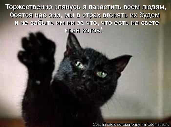Котоматрица: Торжественно клянусь я пакастить всем людям, боятся нас они, мы в страх вгонять их будем и не забыть им ни за что, что есть на свете клан кото