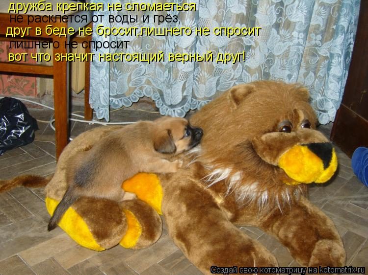 Котоматрица: дружба крепкая не сломаеться не расклется от воды и грёз, друг в беде не бросит,лишнего не спросит лишнего не спросит вот что значит настоящ