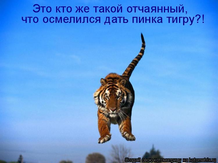 Котоматрица: Это кто же такой отчаянный,  что осмелился дать пинка тигру?!