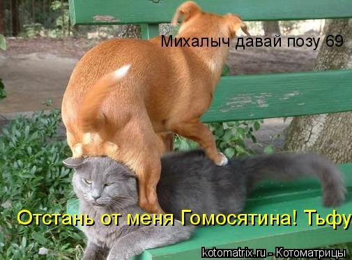 Котоматрица: Михалыч давай позу 69 Отстань от меня Гомосятина! Тьфу!