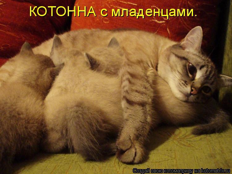 Котоматрица: КОТОННА с младенцами.