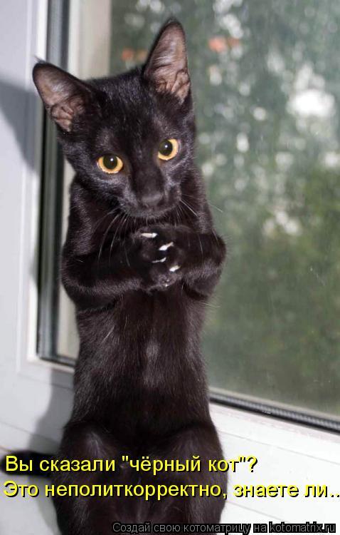 """Котоматрица: Вы сказали """"чёрный кот""""?  Это неполиткорректно, знаете ли..."""