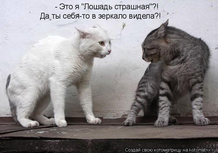 """Котоматрица: - Это я """"Лошадь страшная""""?! Да ты себя-то в зеркало видела?!"""
