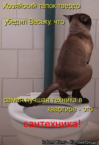 Котоматрица: Хозяйский тапок твердо самая лучшая техника в квартире - это сантехника! убедил Ваську, что
