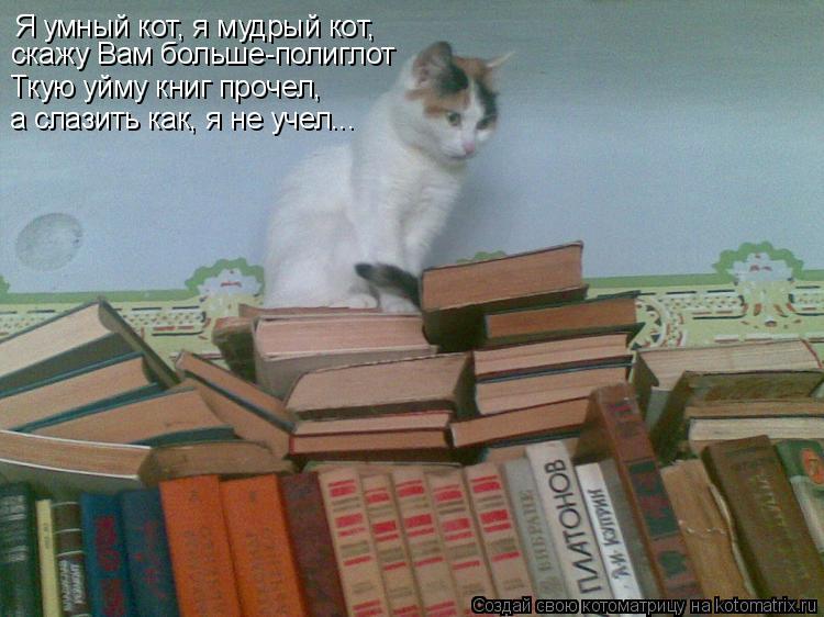 Котоматрица: Я умный кот, я мудрый кот, скажу Вам больше-полиглот Ткую уйму книг прочел, а слазить как, я не учел...