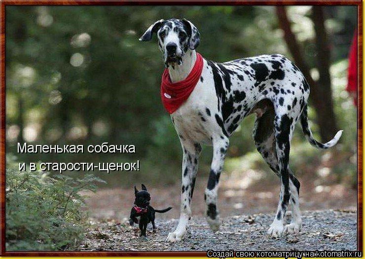 Котоматрица: Маленькая собачка  и в старости-щенок!