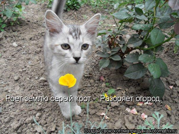 Котоматрица: Роет землю серый крот -  Разоряет огород.