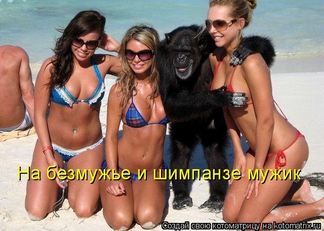 Котоматрица: На безмужье и шимпанзе мужик
