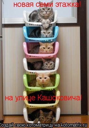 Котоматрица: новая семи этажка! на улице Кашоковича!
