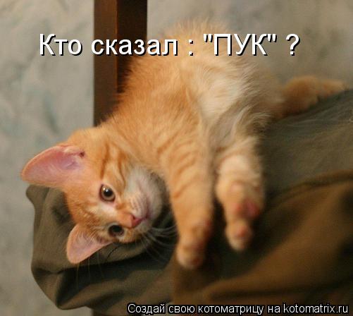 "Котоматрица: Кто сказал : ""ПУК"" ?"