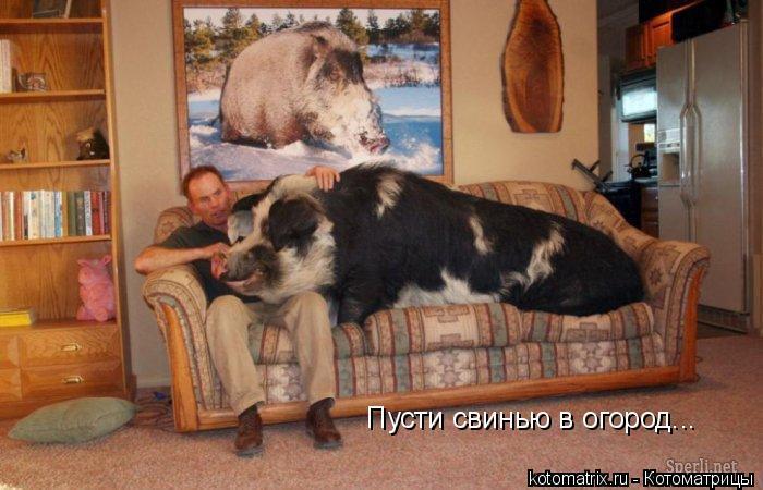 Котоматрица: Пусти свинью в огород...