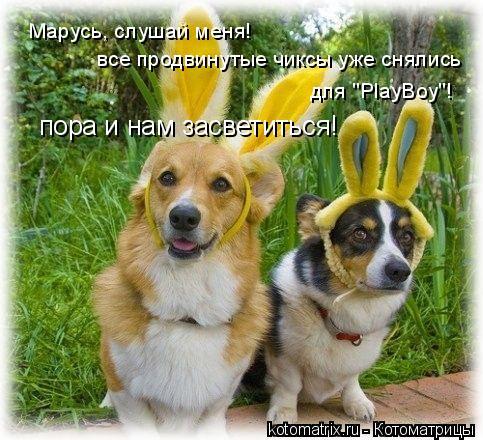 """Котоматрица: Марусь, слушай меня! все продвинутые чиксы уже снялись  для """"PlayBoy""""!  пора и нам засветиться!"""