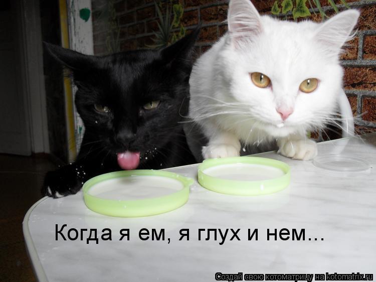 Котоматрица: Когда я ем, я глух и нем...