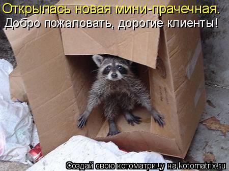 Котоматрица: Открылась новая мини-прачечная. Добро пожаловать, дорогие клиенты!