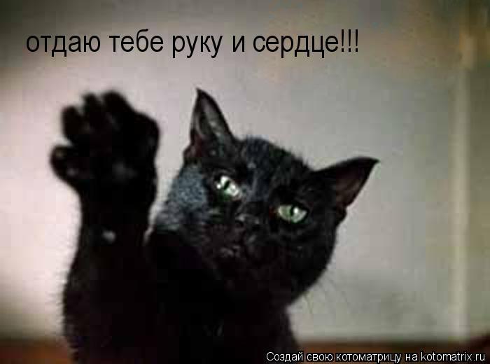 Котоматрица: отдаю тебе руку и сердце!!!