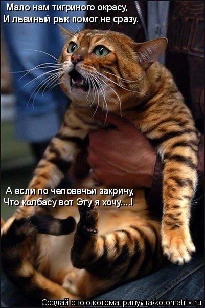 Котоматрица: Мало нам тигриного окрасу, И львиный рык помог не сразу. А если по человечьи закричу, Что колбасу вот Эту я хочу....!