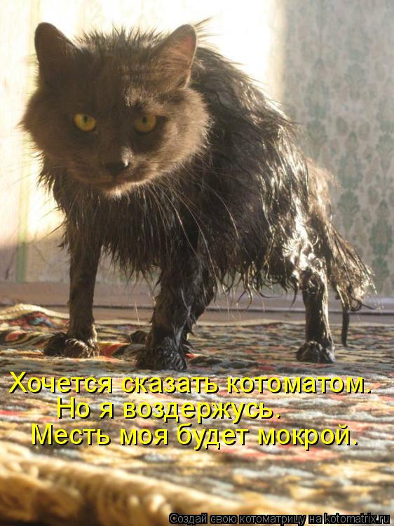 Котоматрица: Хочется сказать котоматом. Но я воздержусь. Месть моя будет мокрой.