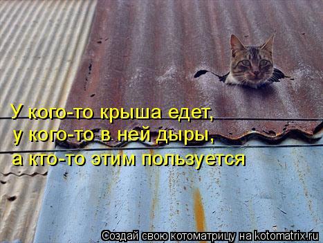Котоматрица: У кого-то крыша едет, у кого-то в ней дыры, а кто-то этим пользуется