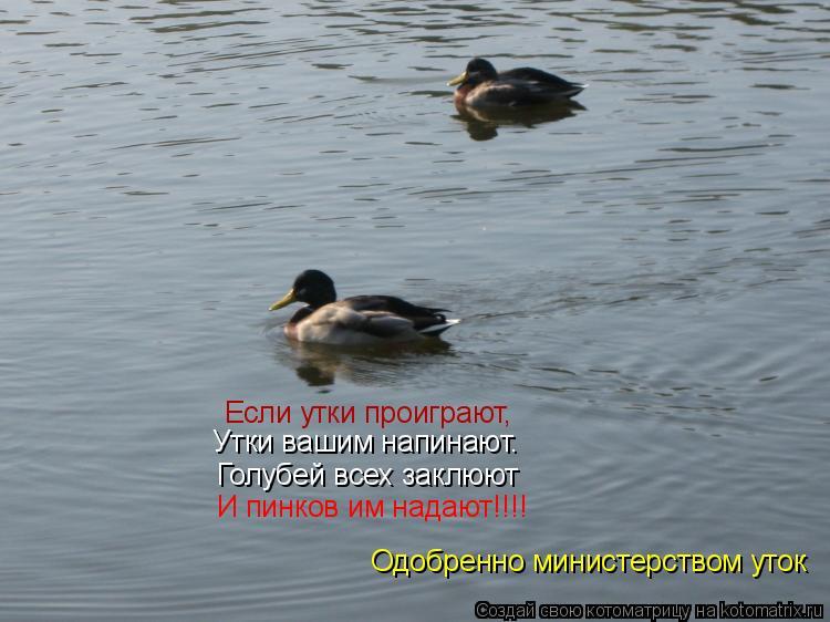 Котоматрица: Если утки проиграют, Утки вашим напинают. Голубей всех заклюют И пинков им надают!!!! Одобренно министерством уток