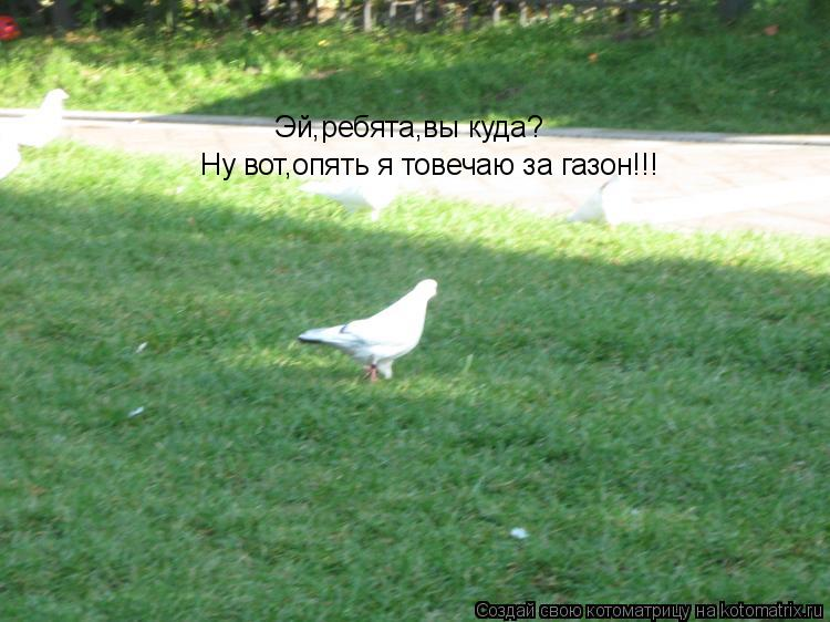 Котоматрица: Эй,ребята,вы куда? Ну вот,опять я товечаю за газон!!!
