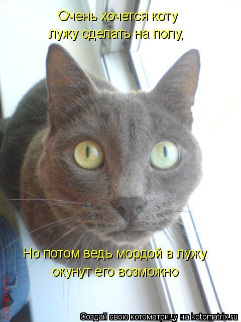 Котоматрица: Очень хочется коту лужу сделать на полу, Но потом ведь мордой в лужу окунут его возможно