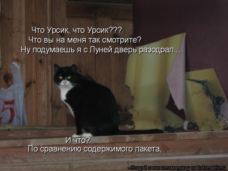 Котоматрица: Что Урсик, что Урсик??? Что вы на меня так смотрите? Ну подумаешь я с Луней дверь разодрал... И что? По сравнению содержимого пакета,