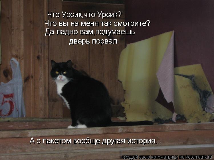 Котоматрица: Что Урсик,что Урсик? Что вы на меня так смотрите? Да ладно вам,подумаешь дверь порвал А с пакетом вообще другая история...