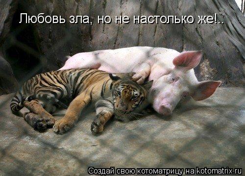 Котоматрица: Любовь зла, но не настолько же!..