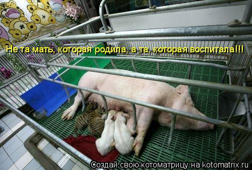 Котоматрица: Не та мать, которая родила, а та, которая воспитала!!!