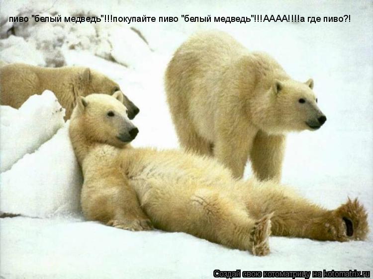 """Котоматрица: пиво """"белый медведь""""!!!покупайте пиво """"белый медведь""""!!!АААА!!!!а где пиво?!"""